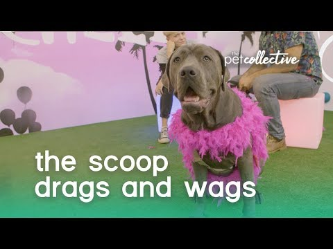 The Scoop: Drags & Wags
