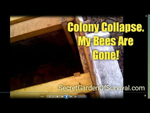 Colony Collapse  - My Bees Are Gone!