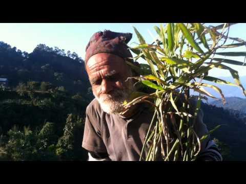 Trip to India, Nepal, Indonesia