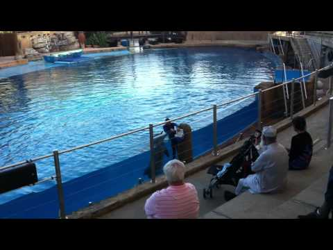 Dolphin Show at uShaka Marine World Durban 1