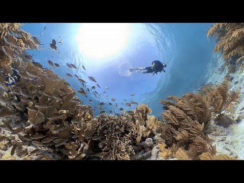 Hogyan lehet megmenteni a korallzátonyokat