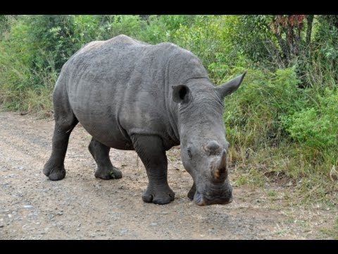 Adventures in Africa II