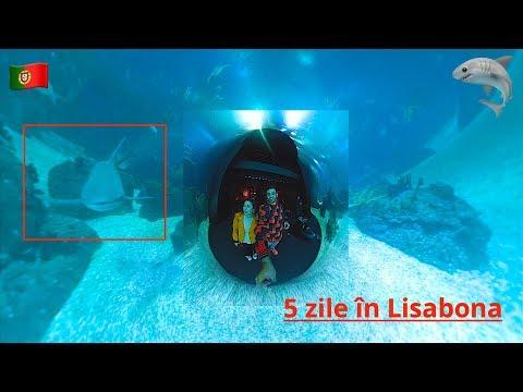 Ne-am întâlnit cu rechinii în Lisabona | #DailyVlog