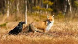 O corvo e raposa