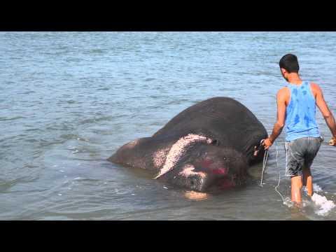 Elephant bath, Nepal (Chitwan)