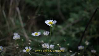 Lola - mirror talk [Legendado/Tradução]