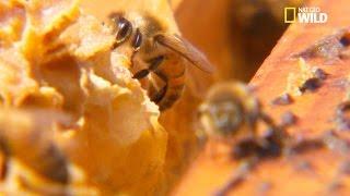 Des abeilles responsables d'accidents mortels width=