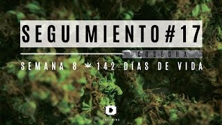 Seguimiento 17 - Cultivo Indoor LED
