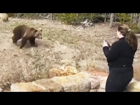 Woman Arrested for Getting Too Close to Bear: Cops