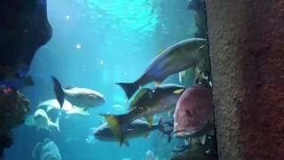 Aquaman speaks...Denver Aquarium