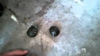 Turtles :o)
