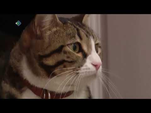 Кот из Сыктывдина получил гран-при в конкурсе «Кото-культурная столица».