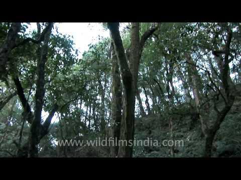 Wild forested hillsides in Jotsoma, Kohima