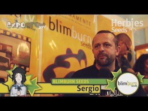 BCN BlimBurn Seeds @ Expogrow 2014 Irun