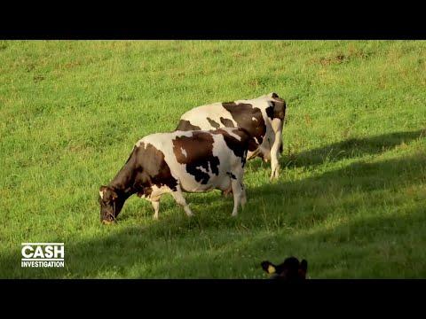 Nouvel Ordre Mondial - La Nouvelle Zélande, la vache à lait du monde - Cash investigation (Extrait 3)
