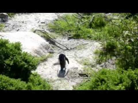 38. Cape Town: Boulders Beach Penguins (pt. 1)