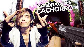 MANDRAGORA AK-47 (OFICIAL)