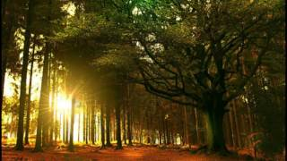 """Julien WIld - """"Celtic Dream"""" (Shakuhachi Flute & Nature Sounds)"""
