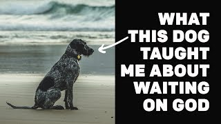 What A Dog Taught Me About Patiently Waiting For God