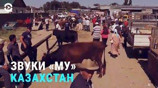 Совет от Назарбаева