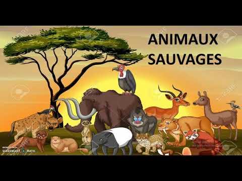 Los animales salvajes en español y francés