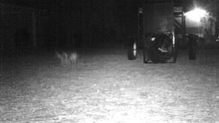 Trail Camera Ghost Video