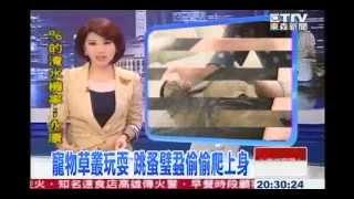 東森新聞-寵物跳蚤-蚤不到.WMV