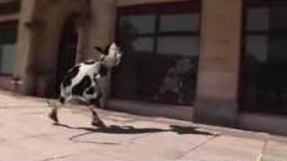 Crazy Cow - I Like to Moo