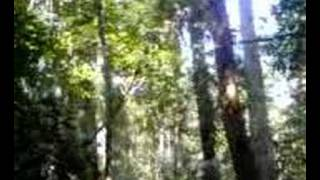 Jungle sounds at Khao Yai