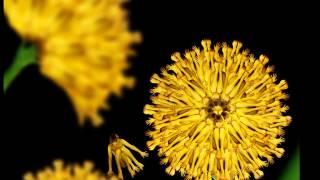藝術人體合成花圖(影片)