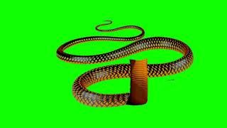 Golden half snake tail in green screen