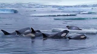 Watch this wildlife war happen in real life!