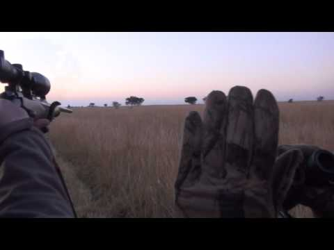 Polowanie w Afryce – Hartebeest (Bawolec)/ Hunting in South Africa Gold Medal Hartebeest 2012