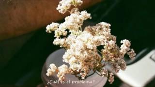 SALES - ivy (Sub. Español)