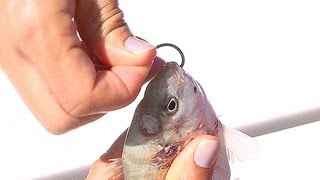 How To Rig A Pinfish For Saltwater Fishing