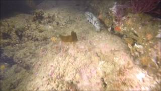 Strange Underwater Noise