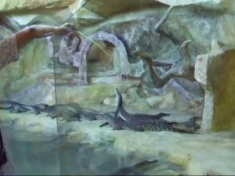 Открытие крокодиляриума в Ялте