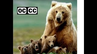 Lyle Lovett - Bears - closed captioned