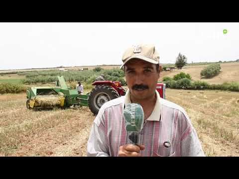 Video : Moulay Driss Aghbal : Les agriculteurs tirent la sonnette d'alarme en raison de la faible récolte