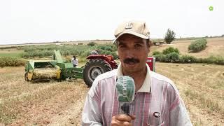 Moulay Driss Aghbal : Les agriculteurs tirent la sonnette d'alarme en raison de la faible récolte