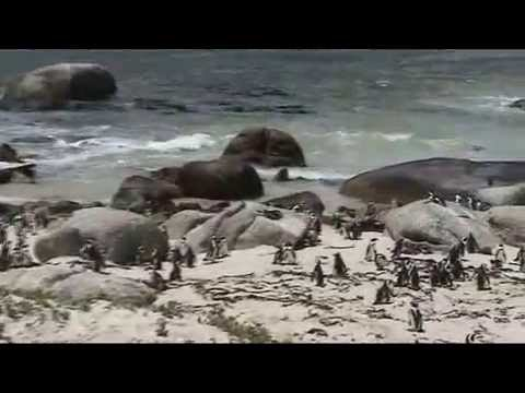 South Africa 2011_1 fabiopat69.mp4