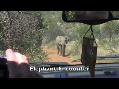 South Africa – Pilanesberg Elephant Encounter