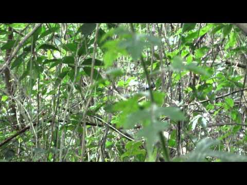 Birdwatching – Cafe de Santos