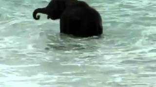Baby olifant ziet voor het eerst de zee