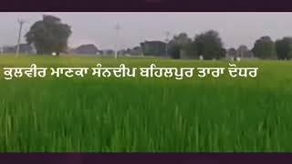 India punjab bull race