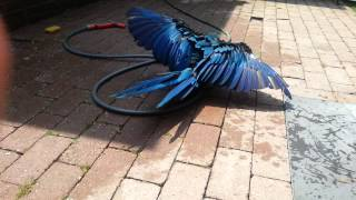 Bleu heeft een gaatje ontdekt in de tuinslang