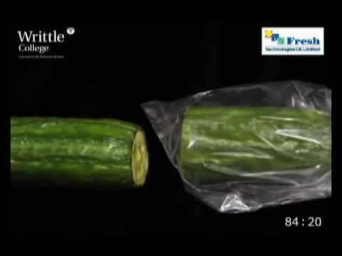 Comparison of Cucumbers stored in Fresh & Smart Liners versus Unpacked in Ambient