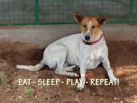 Humane Animal Society (HAS)