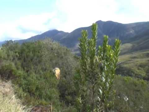 Wodospad na drodze do Kapsztadu