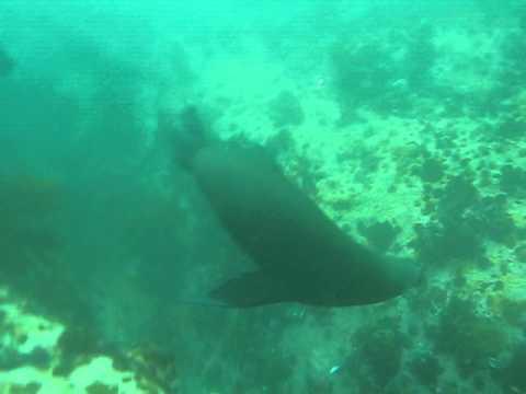 Seal dive